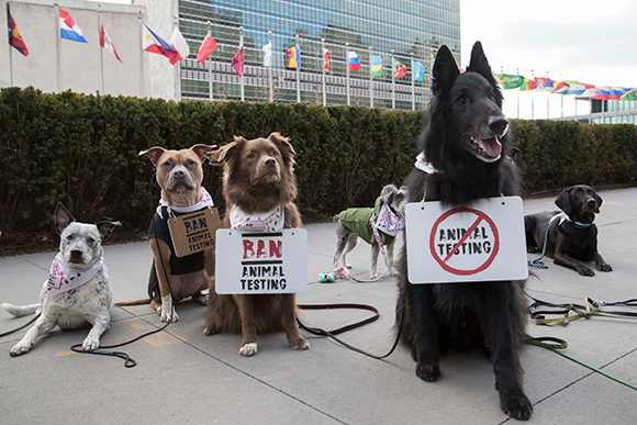 """The Body Shop và tổ chức Quốc Tế Cruelty Free International triển khai chiến dịch """"Phản đối việc thử nghiệm mỹ phẩm trên động vật"""""""
